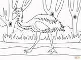 Emu Coloring Printable Luxury Drawing Popular Categories sketch template