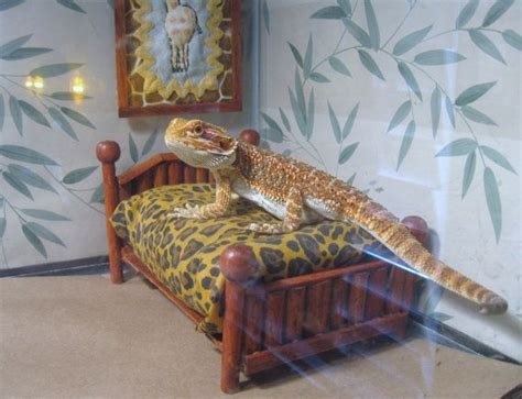 30 best images about bearded dragons on pinterest real