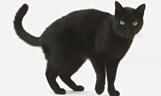 black cats for generation selfie is spurning black cats and