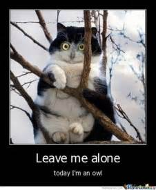 owl cat meme cats cats