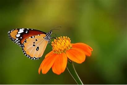 Butterfly Butterflies Wallpapers Pretty Birds Flower Wallpapertag