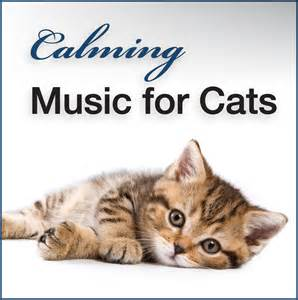 calming cat calming for cats dogs and other household pets