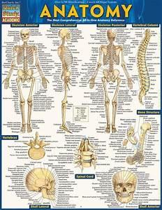 Anatomy Laminated Study Guide  9781423222781