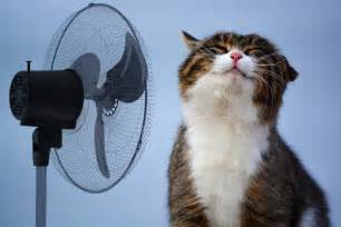 cat fan 5 tips for keeping cats cool cats herd you
