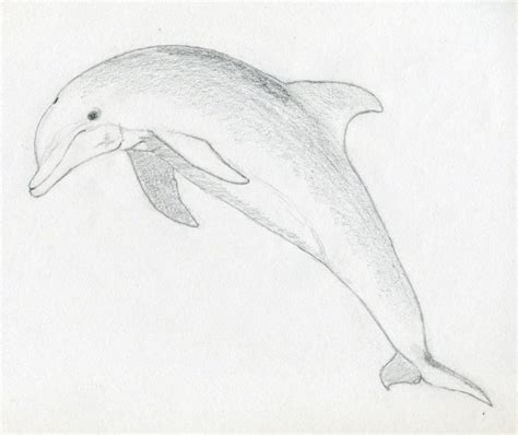 dolphin  water drawing