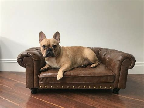 Hund Auf Sofa by Sofa Bed Max Sofa Bed Contemporary Beds By