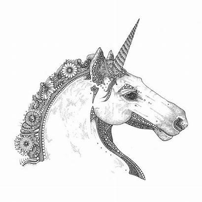 Pdf Dumfries Galloway Folk Tales Safari Creations