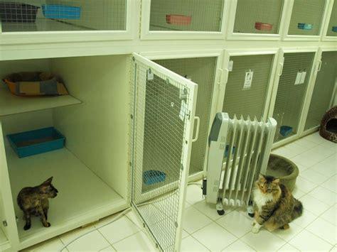 Tanda Hamil Muda 5 Hari Hotel Kucing Di Kuwait Catatan Ardi 39 S Family Blog Kuwait