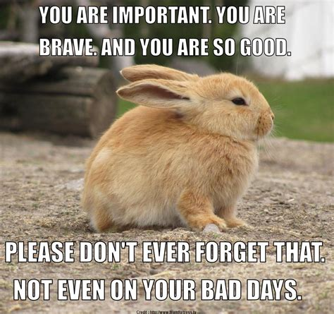 Meme Encouragement - 15 encouragement memes that will surely uplift your day sayingimages com