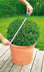 Buchsbaum Schablone Kaufen : buchsbaum schneiden buchsbaum garten garten ideen und ~ Watch28wear.com Haus und Dekorationen