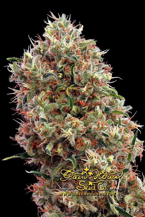 Types Of Marijuana  Marijuanatm  Cannabis News