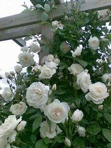 Gartenpforten Aus Holz : die 25 besten ideen zu rosenbogen holz auf pinterest kreis auffahrt landschaftsbau ~ Sanjose-hotels-ca.com Haus und Dekorationen