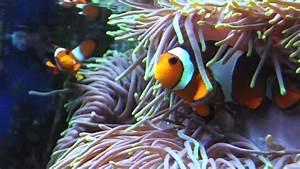 Real Nemo Fish Youtube