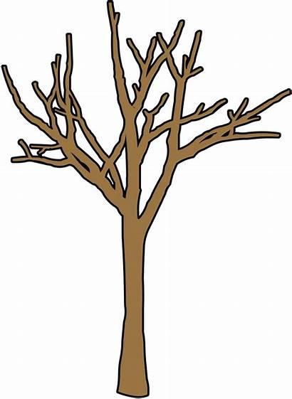 Tree Winter Bare Clipart Clip Trees Trunk
