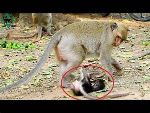 Poor baby monkey, Why mother not care, baby is very dirty ...