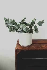 Eucalyptus En Pot : free images tree branch wood leaf flower pot jar ~ Melissatoandfro.com Idées de Décoration