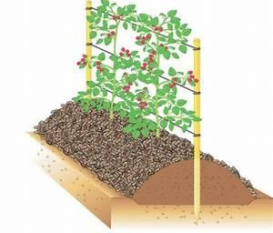 Wann Himbeeren Pflanzen : himbeeren 10 tipps mein sch ner garten ~ Lizthompson.info Haus und Dekorationen