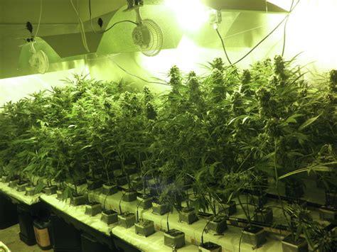 chambre de culture cannabis interieur tuto culture cannabis interieur 28 images bases