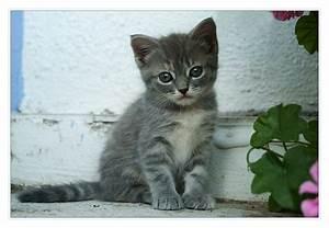 Kleines Häuschen Kaufen : kleines k tzchen foto bild tiere haustiere katzen bilder auf fotocommunity ~ Eleganceandgraceweddings.com Haus und Dekorationen