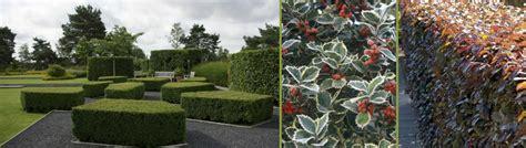 Maybe you would like to learn more about one of these? Soorten hagen en tips   Bloemen en tuincentrum Sampermans ...
