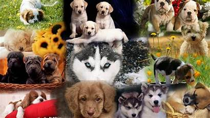 Dog Dogs Puppy Wallpapers Widescreen Breeds Puppies