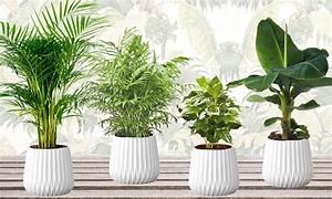Plante Suspendue Intérieur : lot de plantes d 39 int rieur groupon shopping ~ Teatrodelosmanantiales.com Idées de Décoration