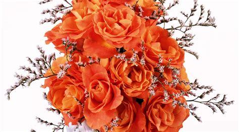Beautiful Orange Roses Wallpapers by Attractive Orange Roses Wallpapers Hd Morewallpapers