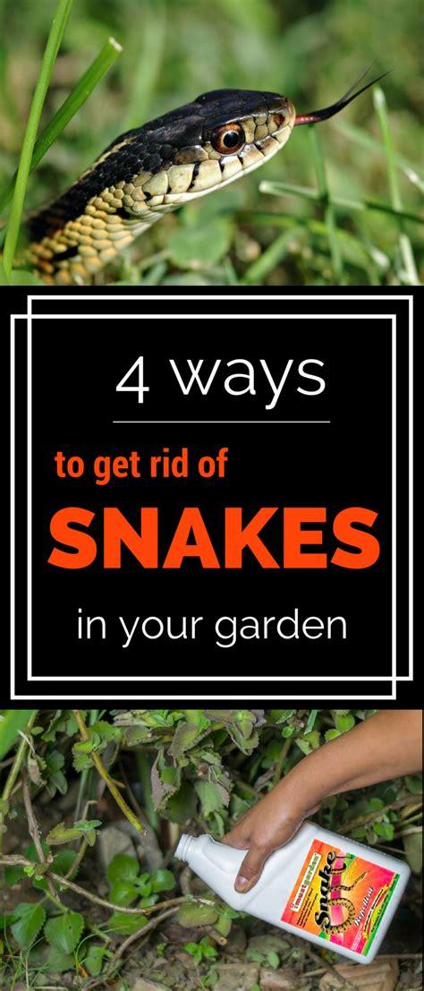4 Ways To Get Rid Of Snakes In Your Garden Gardentipz