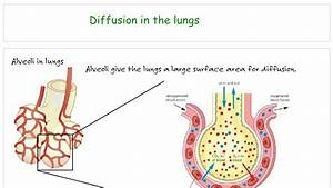 Movement Diffusion Osmosis Active Transport - Biology Tutorial