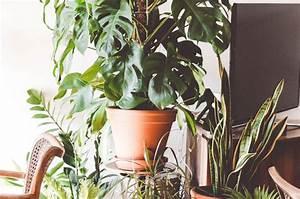 Pflanzen Die Wenig Wasser Brauchen : monstera und sukkulenten pflegeleichte zimmerpflanzen stylebook ~ Frokenaadalensverden.com Haus und Dekorationen