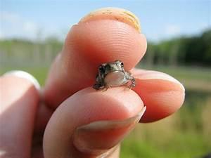 Kleinste Sauna Der Welt : der kleinste frosch der welt wie gross wie schwer wie weit wie hoch ~ Whattoseeinmadrid.com Haus und Dekorationen