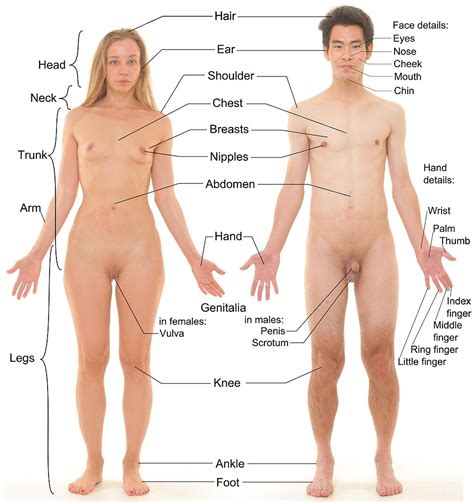 Africa Safari Body Parts Test Flashcards By Proprofs