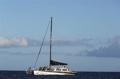 Gemini Catamaran Pictures by The Gemini Catamaran Picture Of Gemini Charters Lahaina