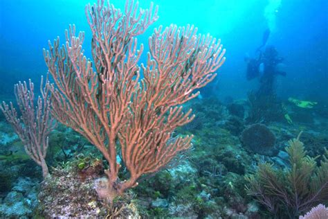 Natural Underwater Springs Show How Coral Reefs Respond to ...