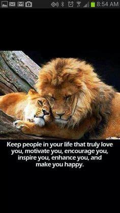 lion  cub quotes quotesgram