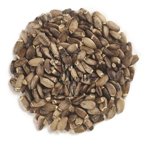 Milk Thistle Seeds Youherbit