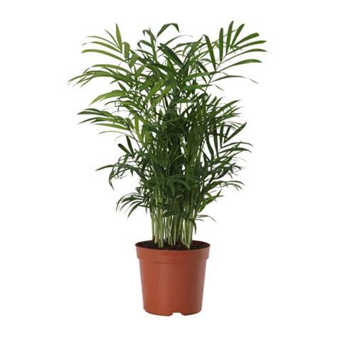 ideas for bathroom storage in small chamaedorea elegans potted plant parlour palm 9 cm ikea