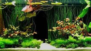 33 Attractive Aquarium background - Technosamrat
