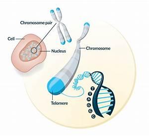 Science - Telomere Diagnostics