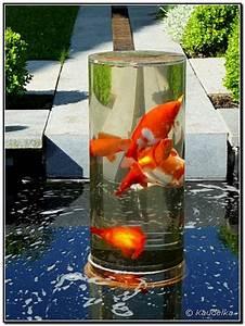 Goldfische Im Teich : homepage familie kaudelka ~ Eleganceandgraceweddings.com Haus und Dekorationen