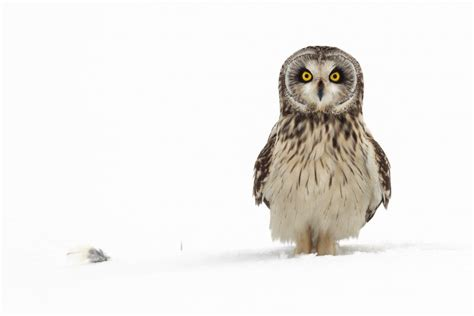 european wildlife photographer   year exhibitions