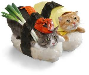 sushi cat cat sushi keychains for feline and sushi