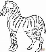 Zebra Coloring Pages sketch template