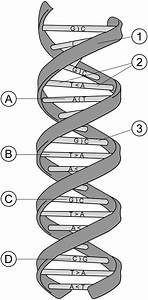 Nucleic Acid Conformation