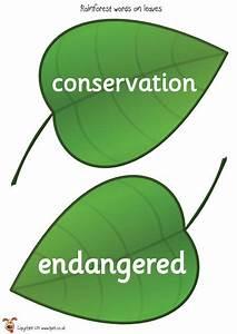 Teacher U0026 39 S Pet - Rainforest Words  On Leaves