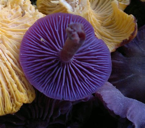 An Introduction To Fungi Foraging Galloway Wild Foods