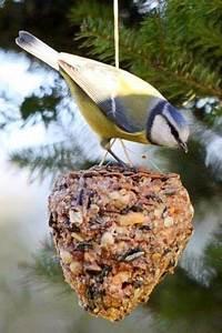 Vogelfutter Selber Machen Rezept : 1000 ideen zu v gel f ttern auf pinterest vogelfutter ~ Lizthompson.info Haus und Dekorationen