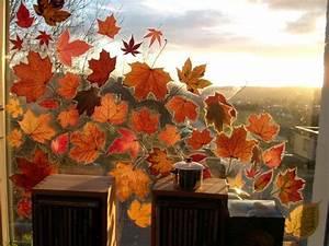Folie Zum Bekleben Von Schränken : getrocknete bl tter auf die klebseite von bucheinschlagfolie legen folie um die blattr nder ~ Bigdaddyawards.com Haus und Dekorationen