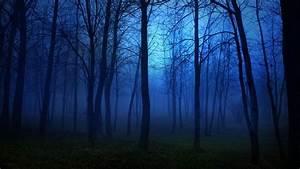 Forest, Nature, Tree, Landscape, Night, Fog, Mist, Dark, Spooky, Wallpaper
