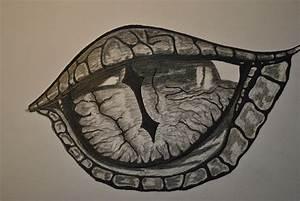 Drachen Schwarz Weiß : drachenauge schwarz wei drachen zeichnen leicht gemacht drawings dragon eye und sketches ~ Orissabook.com Haus und Dekorationen